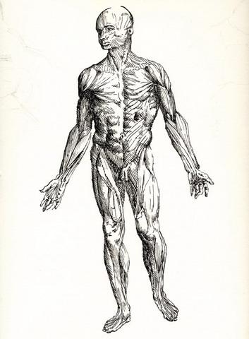 http://artrik.free.fr/2bgal/img/moulsa/anatomie_homme.jpg